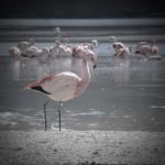 Artistic flamingo...